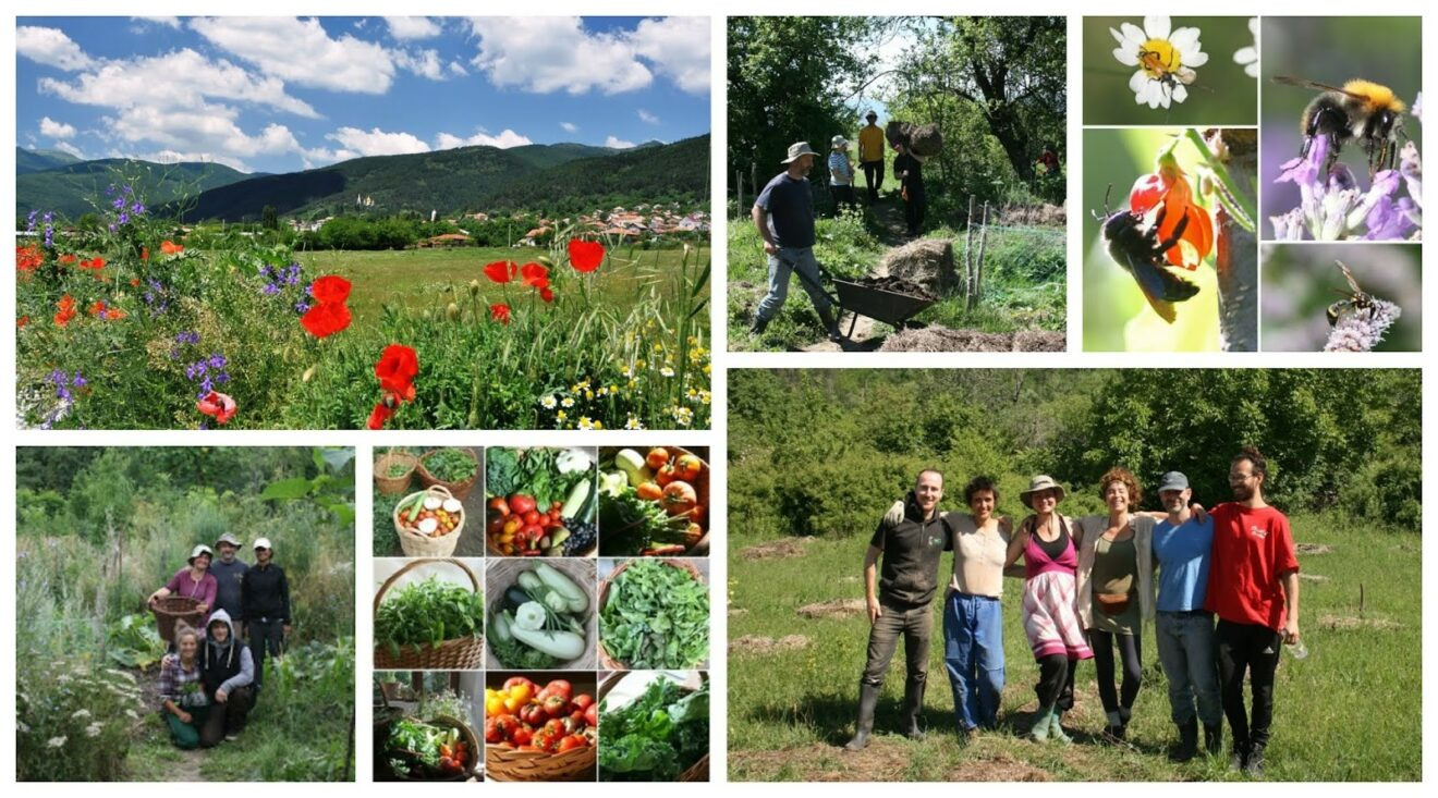 An all round unique volunteering opportunity in the heart of Bulgaria